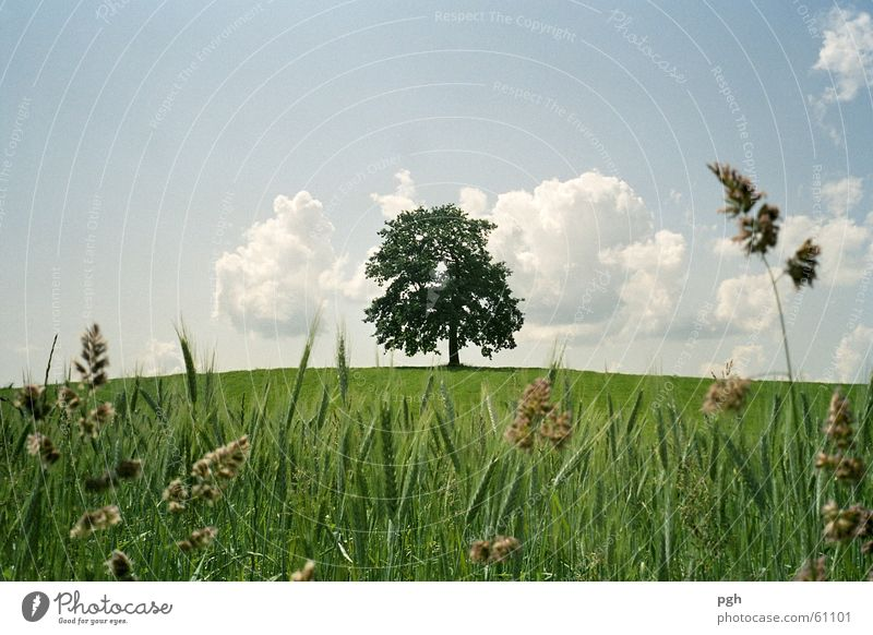 Old beautiful tree in Münsing Green Hill Clouds old beautiful tree in münsing juicy grass solitary Sky