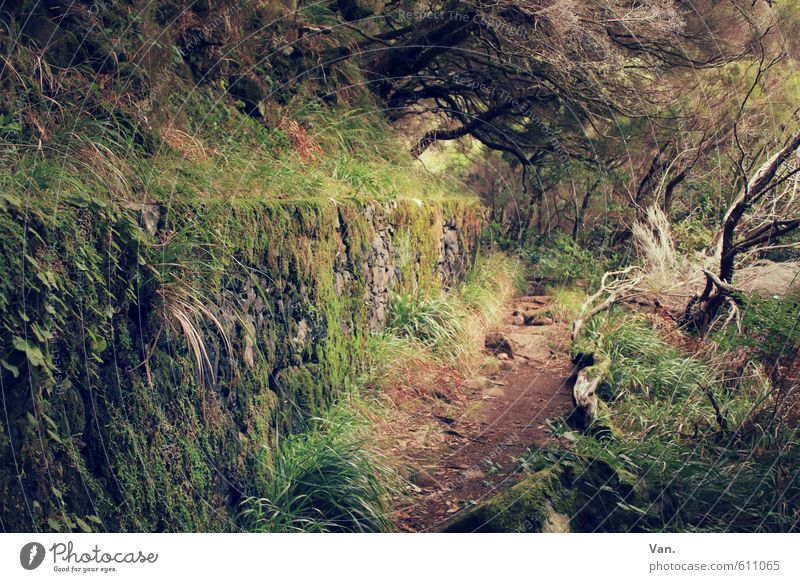 my way Vacation & Travel Hiking Nature Plant Tree Grass Bushes Moss Forest Wall (barrier) Wall (building) Lanes & trails Brown Green Overgrown Narrow Mystic