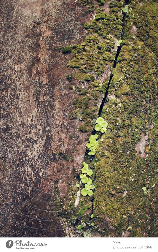 niche existence Nature Plant Moss Leaf Rock Growth Small Brown Green Column Furrow Stone Colour photo Subdued colour Exterior shot Detail Deserted Day