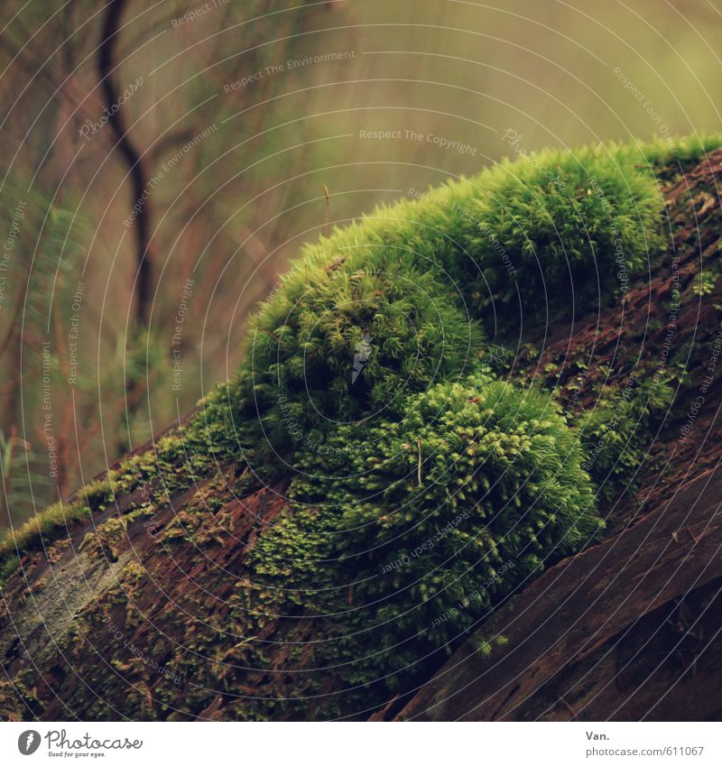 squashy Nature Plant Tree Moss Branch Forest Soft Brown Green Colour photo Multicoloured Exterior shot Close-up Detail Deserted Day Shadow