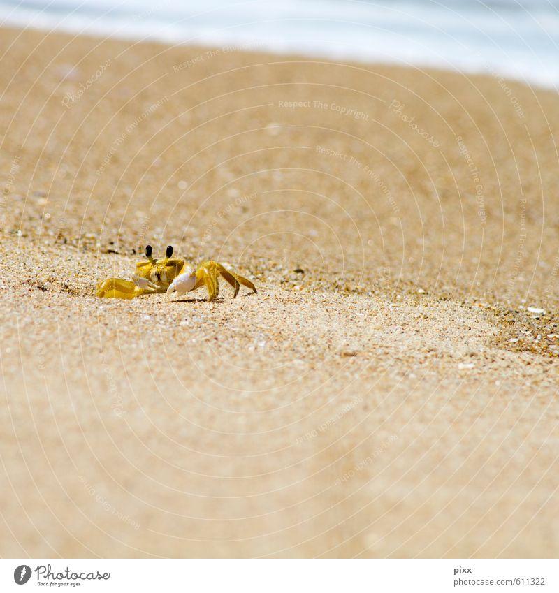 Vacation & Travel Water Summer Ocean Calm Animal Beach Yellow Coast Small Swimming & Bathing Sand Waves Living or residing Wild animal Speed