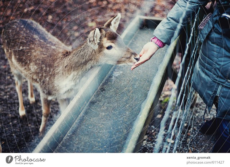 Beautiful Hand Animal Baby animal Playing Leisure and hobbies Idyll Wild Wild animal Esthetic Trip Cute Adventure Fence Animal face Zoo