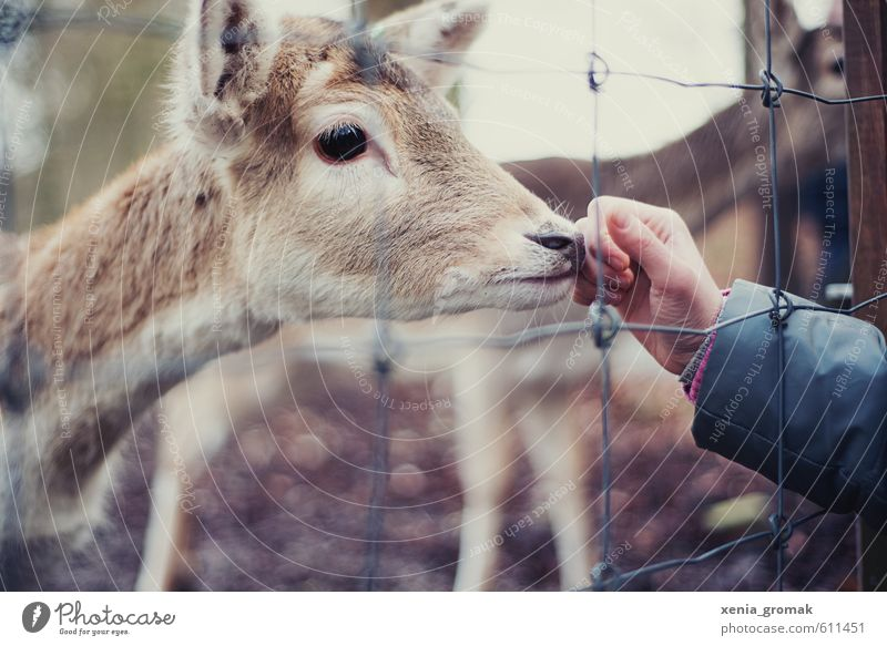 Nature Beautiful Hand Animal Environment Baby animal Playing Leisure and hobbies Wild animal Esthetic Trip Cute Animal face Rust Zoo To feed