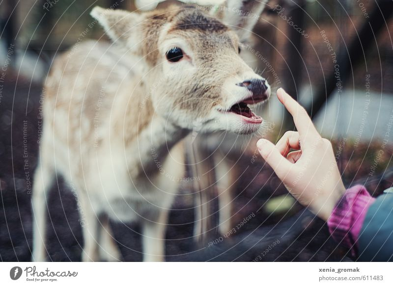 Hand Joy Animal Forest Environment Meadow Park Leisure and hobbies Wild Wild animal Free Trip Adventure Friendliness Animal face Zoo