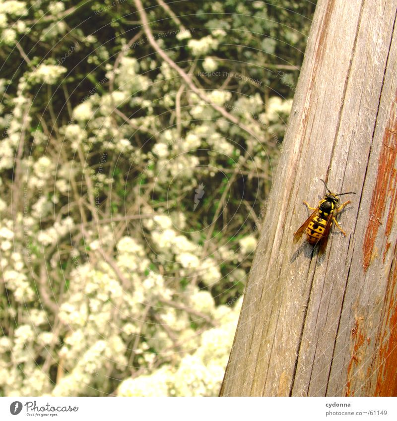Well, also here? Bee Insect Wood Column Spring Blossom Flying Sun Blossoming snapshot Detail Joy Nature
