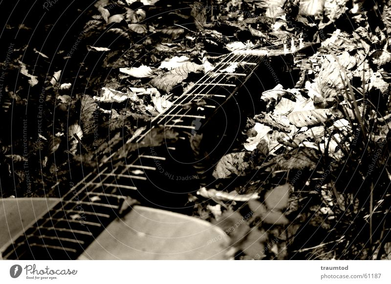 Leaf Loneliness Black Dark Wood Think Guitar Stomach Doomed Neck Tears Song Musical instrument string Sepia Poetic
