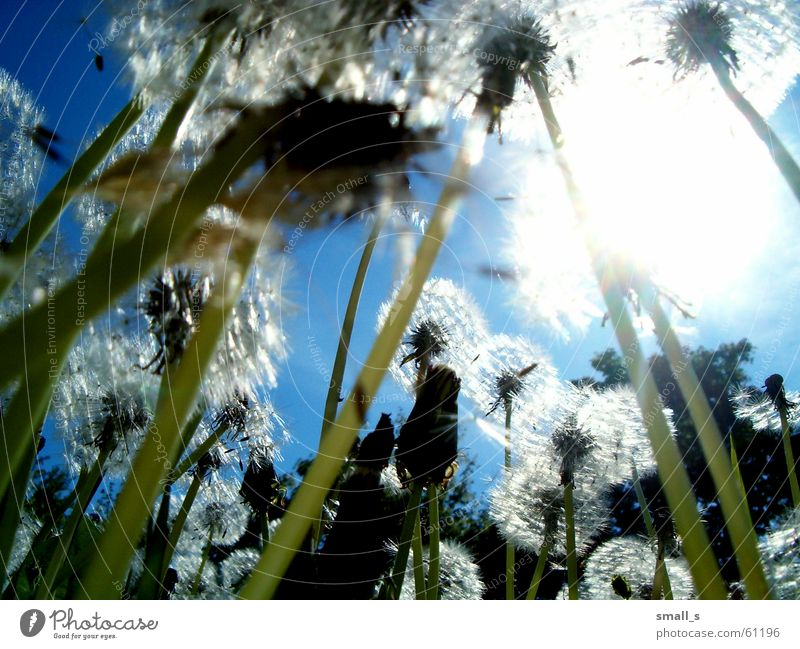 the sun Light Blue sky Jump dandelion joy flower
