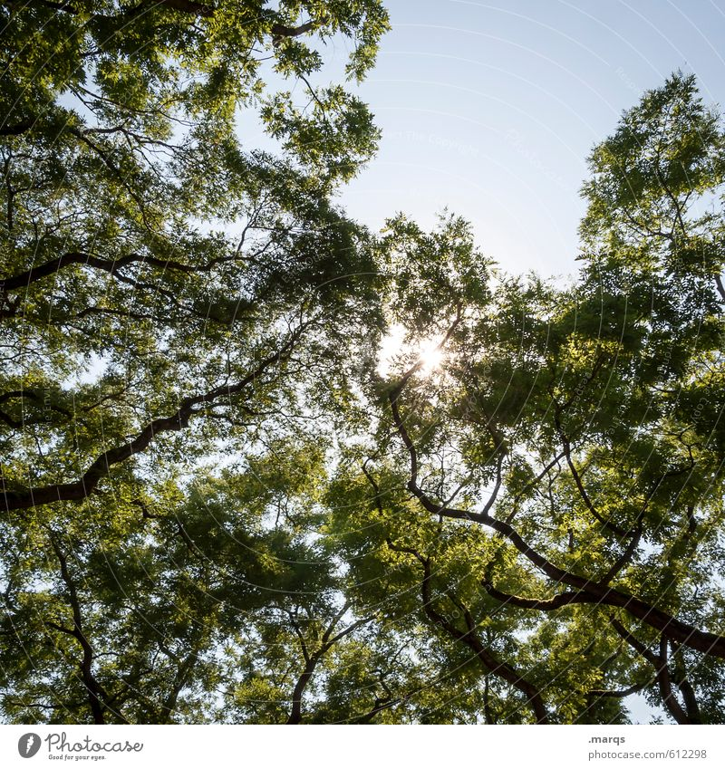 light Environment Nature Cloudless sky Sun Summer Beautiful weather Tree Treetop Branch Deciduous tree Illuminate Simple Bright Moody Spring fever Relaxation