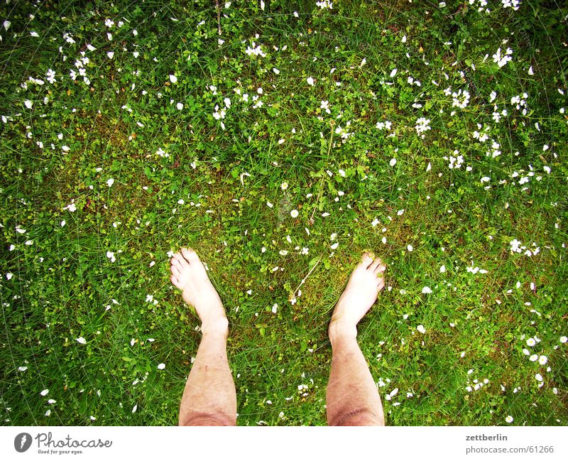 Standing on the meadow Grass Meadow Flower Right Left Toes Barefoot Vacation & Travel Farm Lawn Feet both Free Freedom dangle one's soul Zettberlin