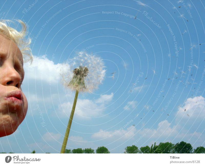 Puff flower Dandelion Blow Clouds Child Sky Boy (child) chubby cheeks