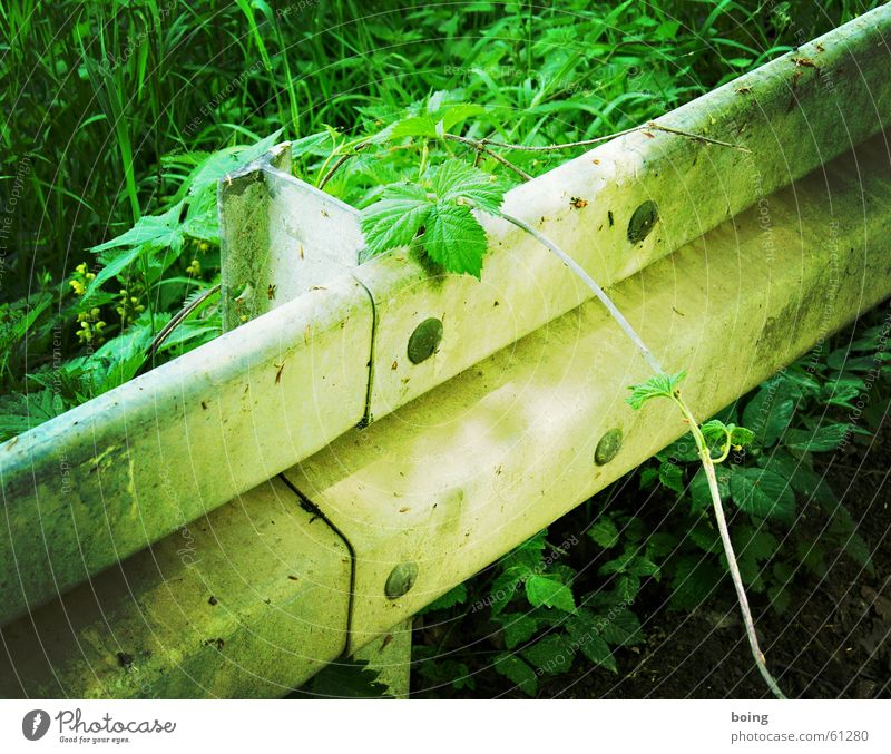 welcome to the jungle Crash barrier Bushes Virgin forest Hedge Street Traffic infrastructure Safety Transience passive protection device luring growth