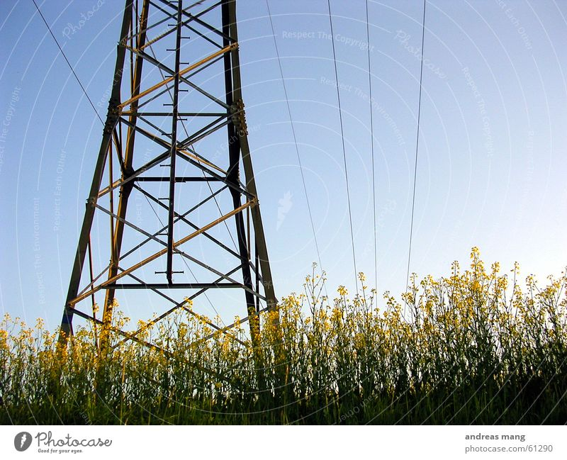 Rapeseed under power Canola field Field Electricity Transmission lines Electricity pylon Steel Sky Power Cable Scaffold