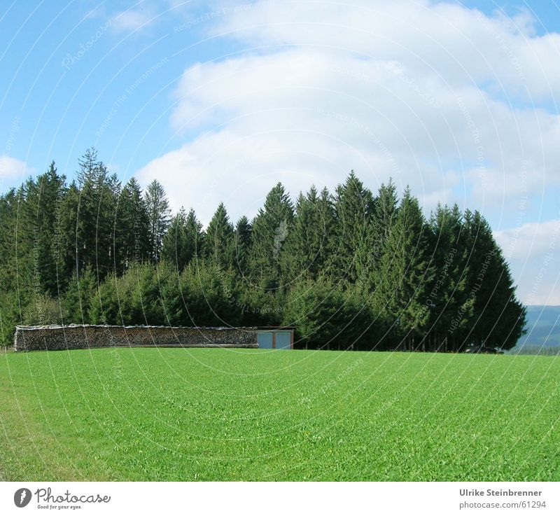 Black forest, fir trees and wood in front of green meadow Colour photo Exterior shot Deserted Copy Space bottom Day Central perspective Summer Landscape Sky