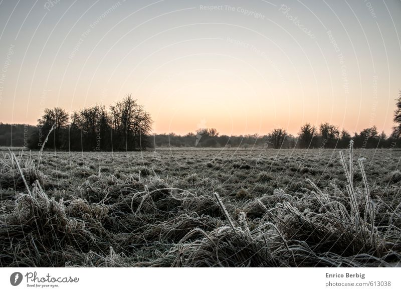 Dawn with a touch of morning maturity Environment Nature Landscape Plant Sky Cloudless sky Sunrise Sunset Winter Beautiful weather Ice Frost Grass Wild plant