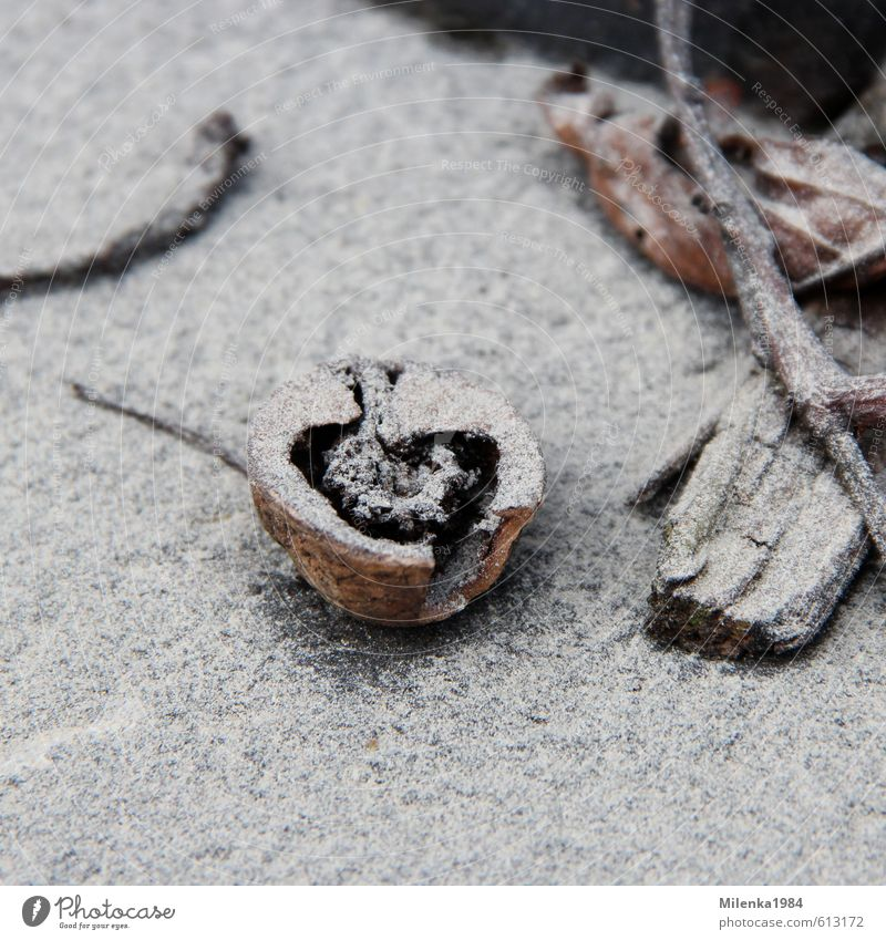 dusty love Wood Environmental pollution Nut Walnut Love Heart Winter Frost Dust Cold Freeze Symbols and metaphors Nature Colour photo Subdued colour