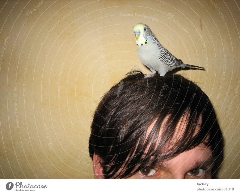 Face Eyes Hair and hairstyles Gray Think Brown Parrots Bird Fat Half Strand of hair Pervasive Budgerigar
