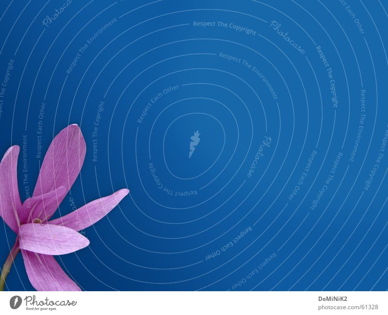 Nature Blue Beautiful Flower Colour Leaf Relaxation Meadow Autumn Spring Blossom Garden Power Hiking Trip Violet