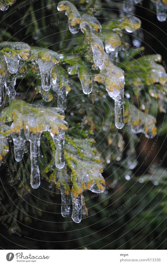 freezing rain Nature Water Drops of water Winter Climate Climate change Bad weather Rain Ice Frost Snow Plant Tree Bushes Freeze Glittering Cold Icicle