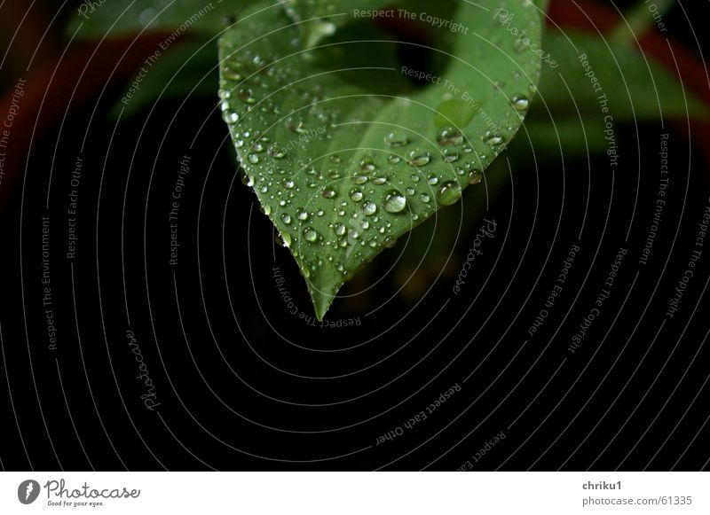 Nature Green Plant Leaf Black Clouds Rain Drops of water Wet Rope Earth Growth Balcony Bad weather Pot plant Maturing time