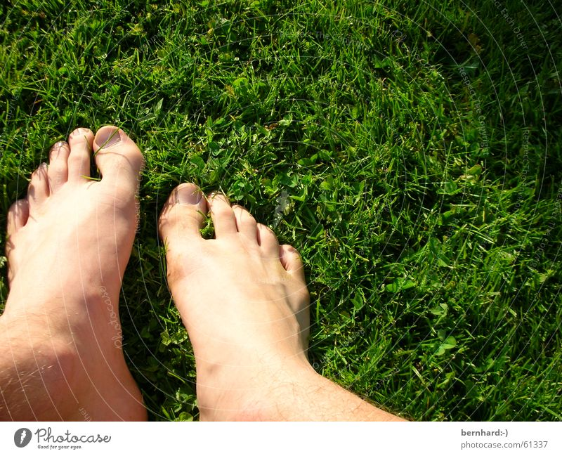 Green Summer Meadow Grass Garden Feet Lawn