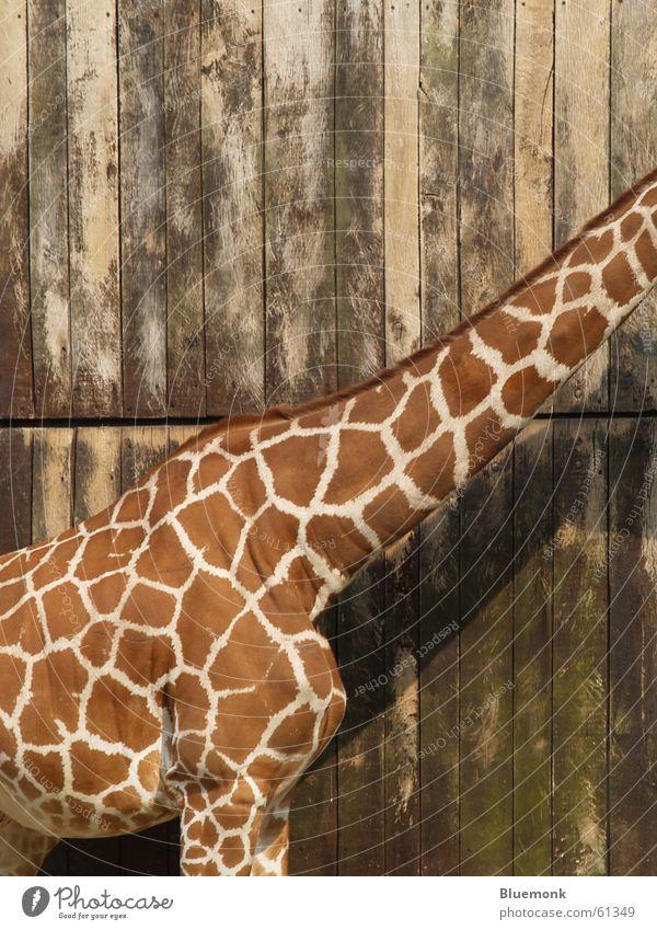 Animal Wood Brown Zoo Gate Patch Safari Dappled Headless Giraffe