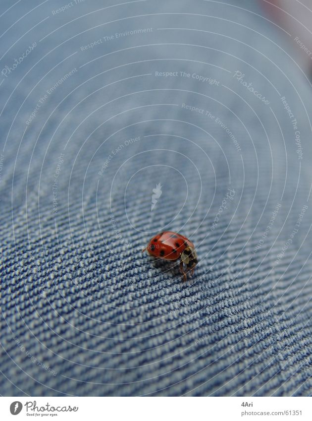 ladybird landing site Ladybird Animal Insect Jeans 6 legs Point