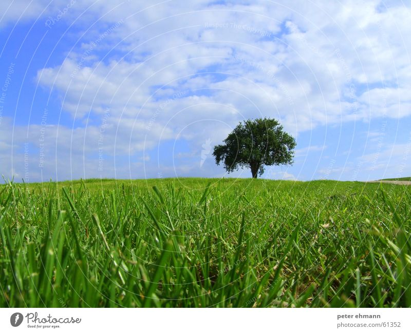 Blue-green thoughts Green Grass Juicy Full Maturing time Bushes Field Blade of grass Herbaceous plants Sprout Summer Spring Agriculture Carpet Jump Clouds