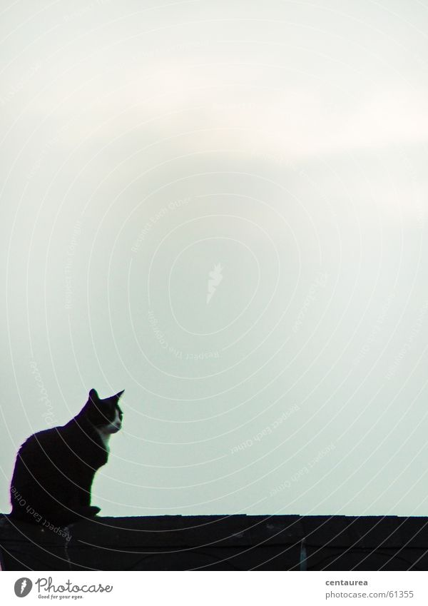 Cat Search Vantage point Roof Observe Domestic cat