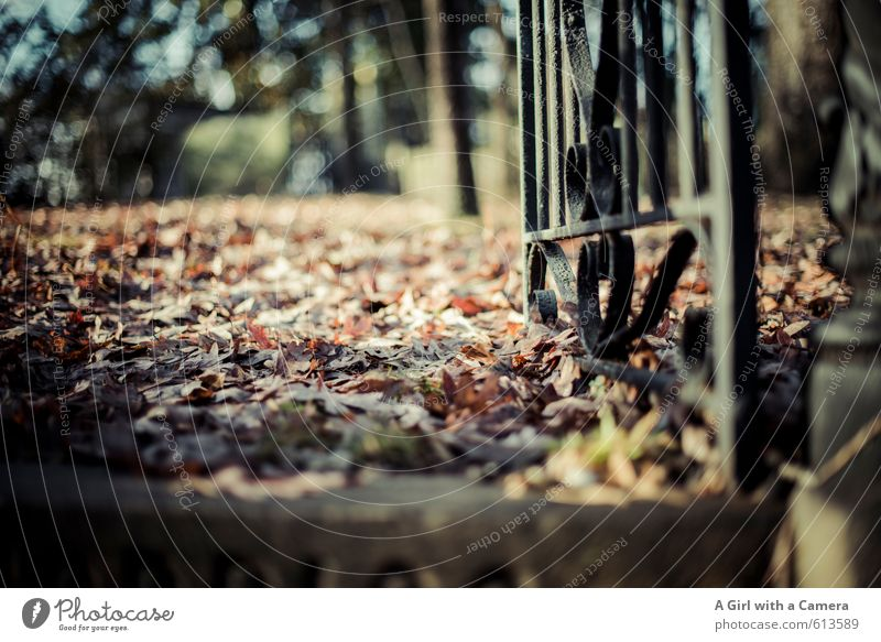 on finding peace Environment Nature Autumn Leaf Natural Calm Iron gate Floor covering Woodground Spooky Entrance Old Past Subdued colour Exterior shot Abstract