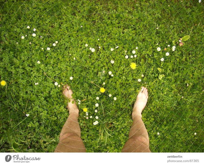On the meadow, other place Grass Meadow Flower Right Left Stand Barefoot Naked Vacation & Travel Farm Lawn Feet both Free Freedom dangle one's soul Zettberlin