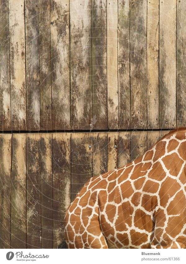 a beautiful back can also delight... Zoo Safari Wood Giraffe Gate Back Patch Dappled