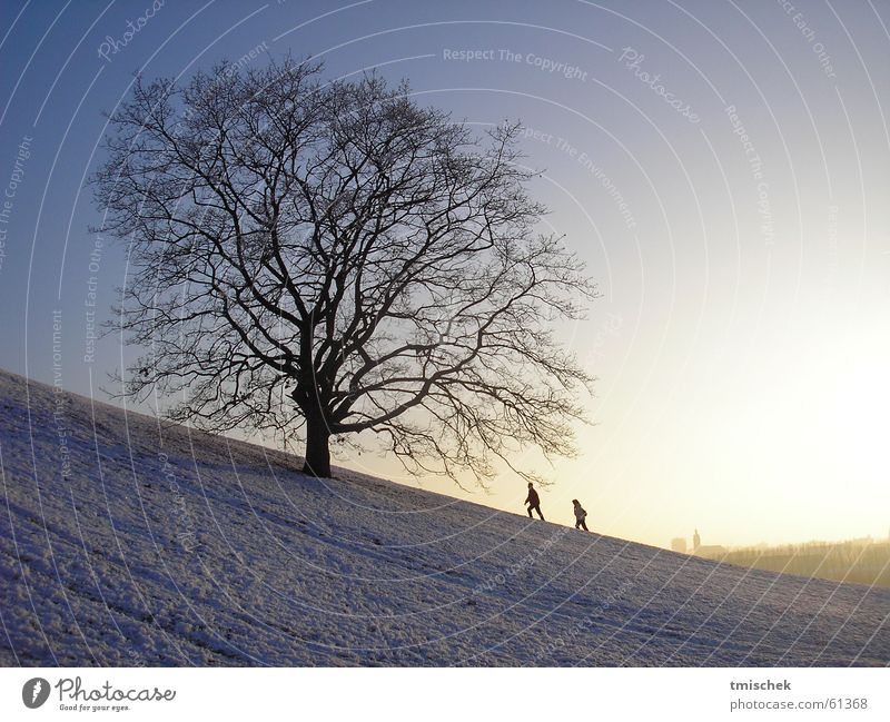 I´ll be there! Winter Olympic Park Munich Sky tree trees couple snow sun heaven