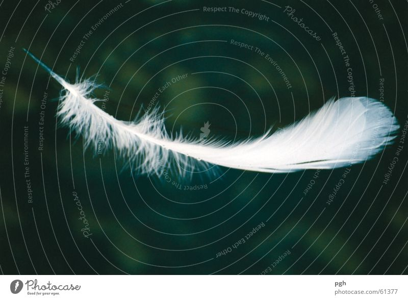 Water White Green Flying Feather Easy Ease