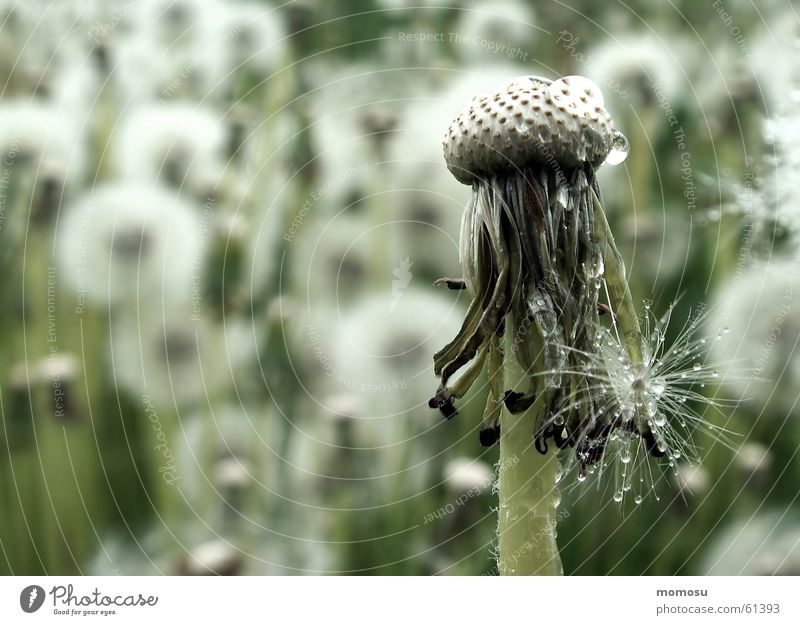 Summer Meadow Blossom Spring Dandelion Seed