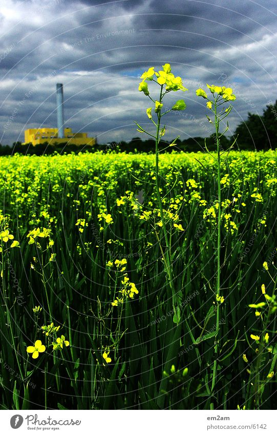 Flower Green Summer Clouds Yellow Blossom Industrial Photography Factory