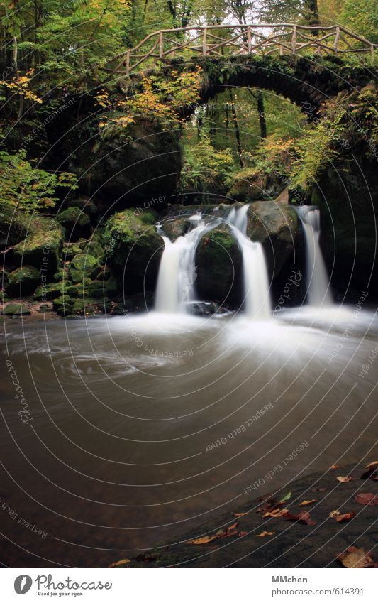 in flux Nature Elements Water Summer Plant Bushes Park Forest Rock Mountain River bank Waterfall Bridge Fluid Green Life Variable Idyll Flow Schiessentümpel