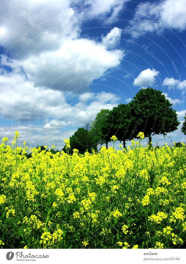yellow days Tree Clouds Yellow Field Summer Sun Contrast