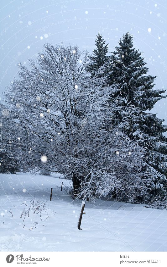 Nature Vacation & Travel Plant Blue Tree Relaxation Landscape Calm Winter Mountain Environment Snow Feasts & Celebrations Snowfall Dream Ice