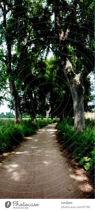 Leaf Avenue