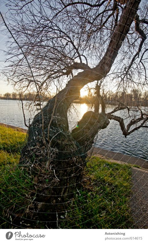 double tree Environment Nature Landscape Plant Water Sky Cloudless sky Sun Sunrise Sunset Sunlight Weather Beautiful weather Tree Grass Park River bank Danube