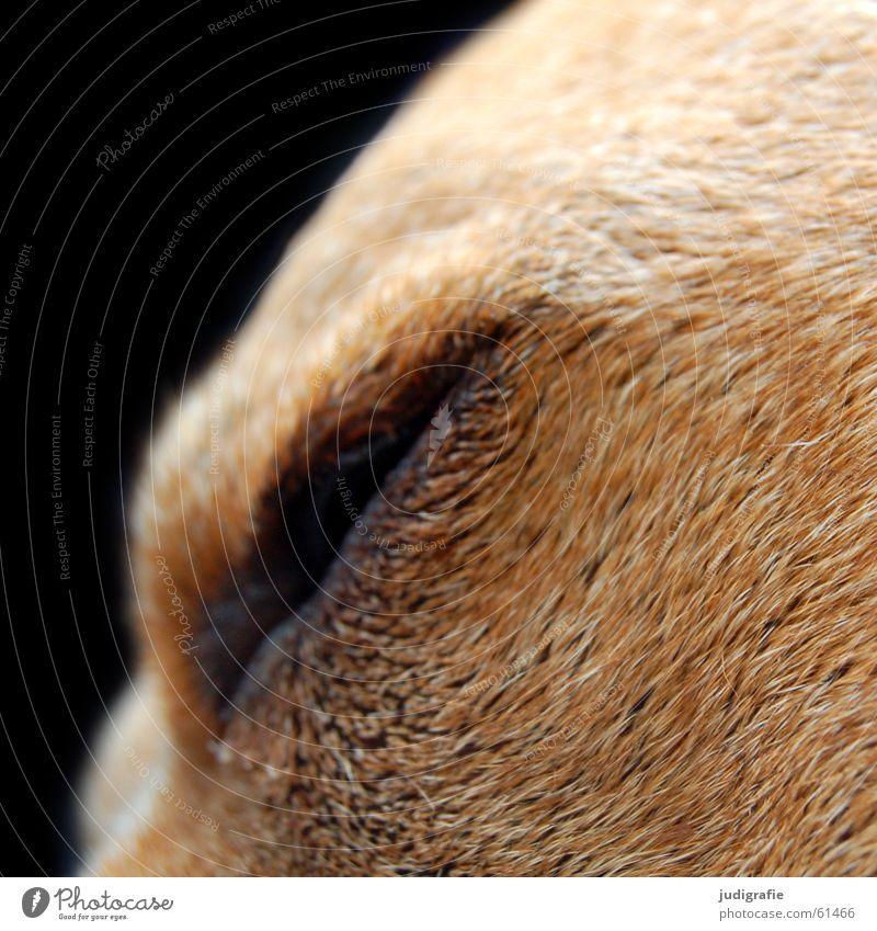 Black Eyes Hair and hairstyles Dog Brown Sleep Soft Pelt Fatigue Pet Loyalty