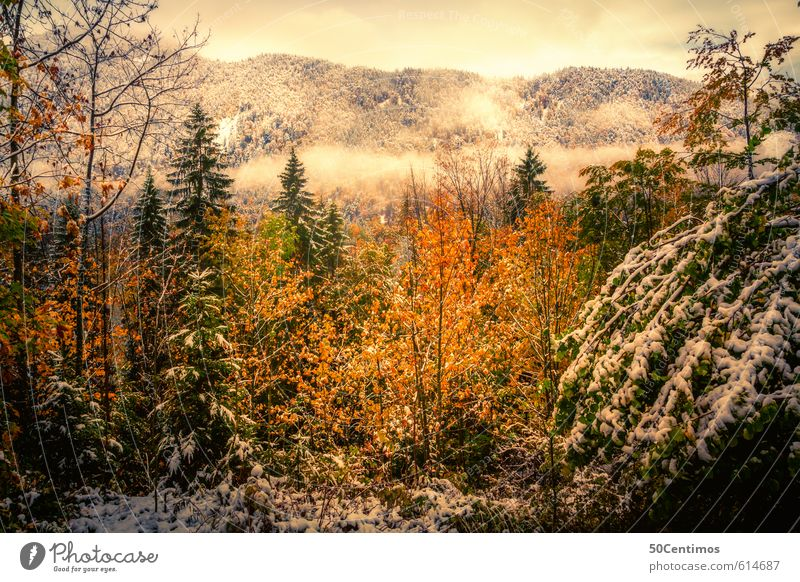 Autumn landscape in the first snow Vacation & Travel Tourism Trip Winter Snow Mountain Environment Nature Landscape Climate Climate change Weather Forest