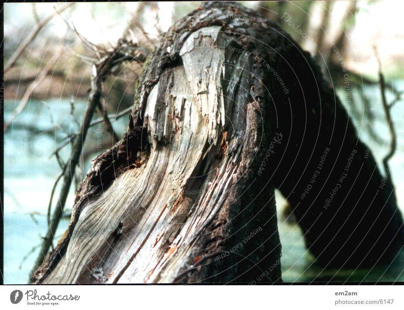 Nature Tree Lake Broken Tree bark