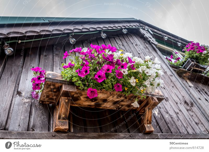 Flowers on the windowsill Lifestyle Elegant Vacation & Travel Tourism Trip Far-off places Freedom Summer Summer vacation Sun Mountain Hiking Plant