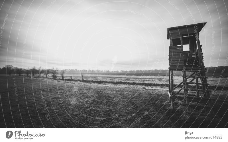 As far as the eye can see Landscape Horizon Sunlight Autumn Winter Beautiful weather Grass Field Hunting Blind Looking Wait Old Large Infinity Curiosity Black