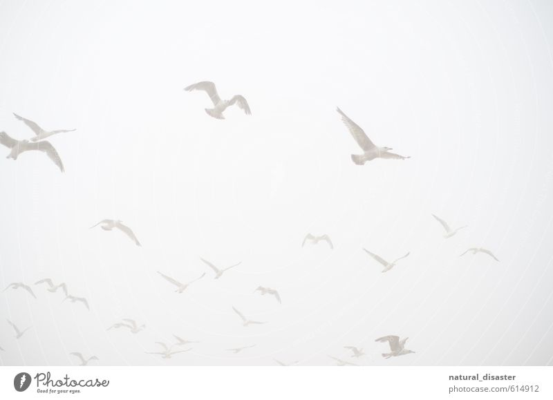 white in white - seagulls in the sky Joy Harmonious Well-being Contentment Relaxation Calm Vacation & Travel Trip Far-off places Freedom Summer Ocean Retirement