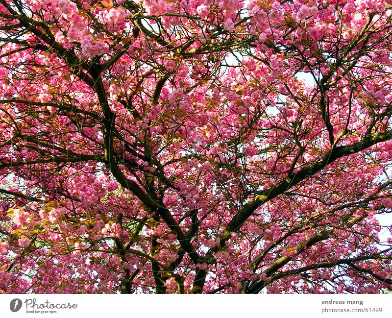 Beautiful Tree Leaf Spring Pink Branch Blossoming Twig