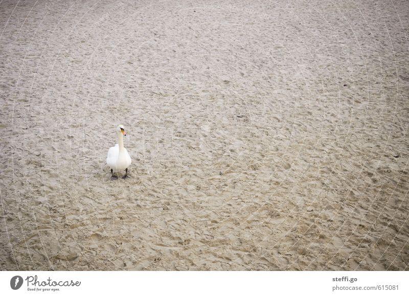 Nature Beautiful Loneliness Animal Beach Coast Sand Bird Fear Wild animal Dangerous Threat Observe Curiosity Bay Longing