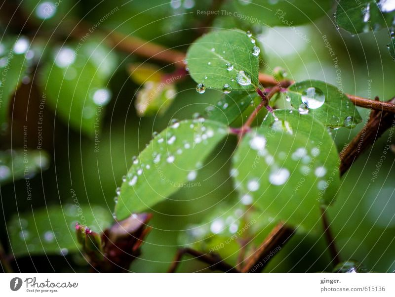 Nature Plant Green Water Leaf Environment Spring Small Brown Rain Glittering Bushes Drops of water Branch Round To hold on