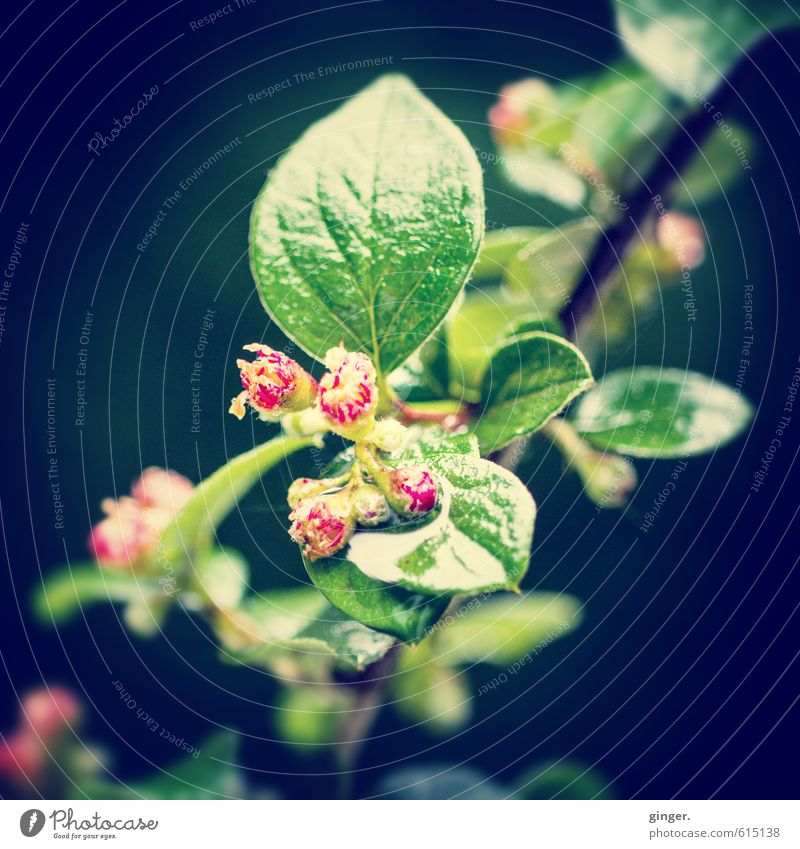 Where have all the good days gone? Environment Nature Plant Bushes Leaf Blossom Yellow Green Red Small Bud Rachis Leaf green Multiple Beautiful Delicate